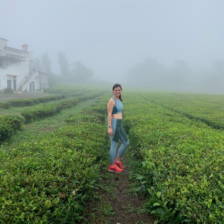 Gorreana tea plantation in the Azores