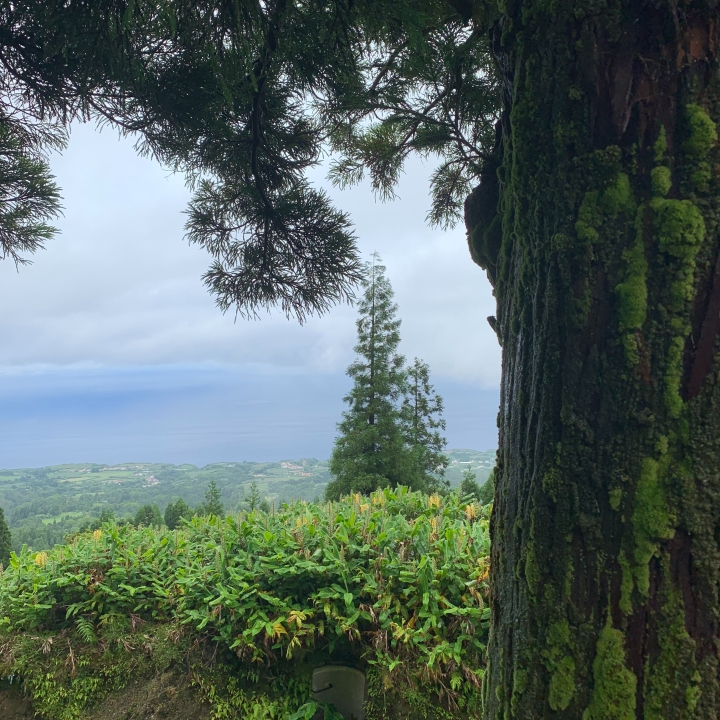 Vista do Rei viewpoint in the Azores