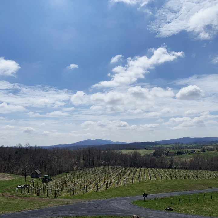 Delaplane Cellars view